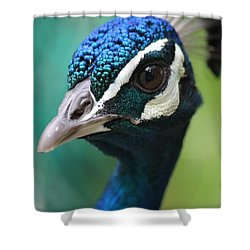 Up Close And Personal  Shower Curtain by Amy Gallagher