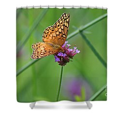 Variegated Fritillary Butterfly In Field Shower Curtain