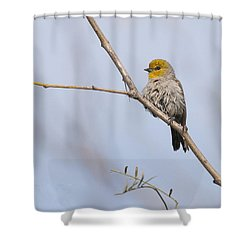 Verdin Shower Curtain