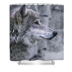Watching And Waiting Shower Curtain by Sandra Bronstein