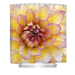Wet Dahlia Shower Curtain by Paul W Faust -  Impressions of Light