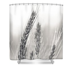 Wheat Shower Curtain
