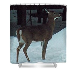 White Tail Deer Shower Curtain by Brenda Brown