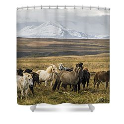 Wild Icelandic Horses Shower Curtain