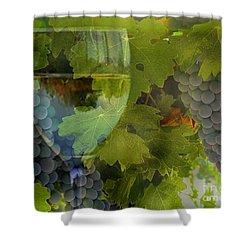 Wine Shower Curtain by Stephanie Laird