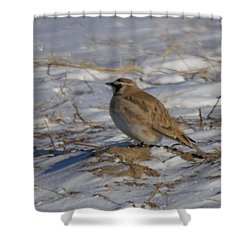 Winter Bird Shower Curtain by Jeff Swan