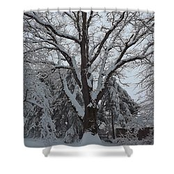 Winter Oak Shower Curtain by John Wartman