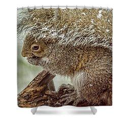 Winter Squirrel Shower Curtain by LeeAnn McLaneGoetz McLaneGoetzStudioLLCcom