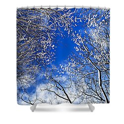 Winter Trees And Blue Sky Shower Curtain by Elena Elisseeva