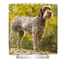 Wire-haired Pointing Griffon Shower Curtain