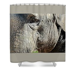 Wise One,elephant  Shower Curtain