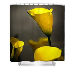 Yellow Calla Lilies Shower Curtain by Menachem Ganon