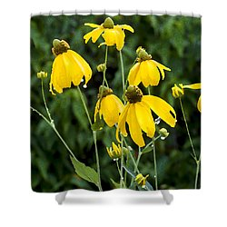 Yellow Cone Flowers Rudbeckia Shower Curtain by Rich Franco