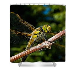 Yellow Dragon Shower Curtain by WB Johnston