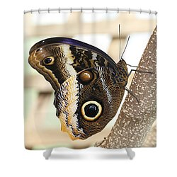 Yellow-edged Giant Owl Butterfly #4 Shower Curtain by Judy Whitton