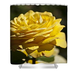 Yellow Rose Shower Curtain by Steve Purnell