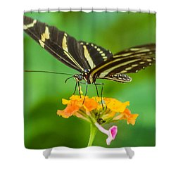 Shower Curtain featuring the photograph Zebra Longwing by Jane Luxton