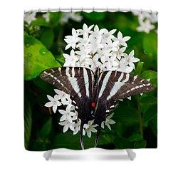 Zebra Swallowtail Shower Curtain