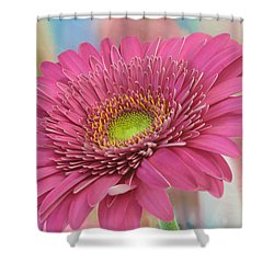 Gerbera Daisy Macro Shower Curtain