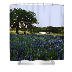 10 Shower Curtain by Susan Rovira