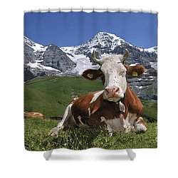 100205p181 Shower Curtain