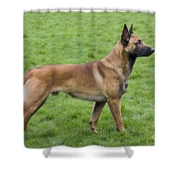101130p020 Shower Curtain