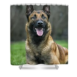 101130p022 Shower Curtain