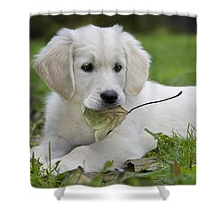 101130p064 Shower Curtain