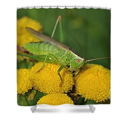 110221p244 Shower Curtain by Arterra Picture Library
