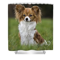 110506p146 Shower Curtain by Arterra Picture Library