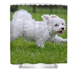 110801p130 Shower Curtain