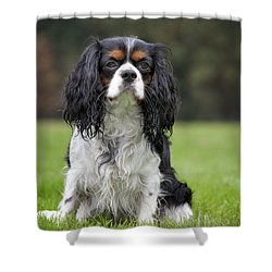 111216p255 Shower Curtain