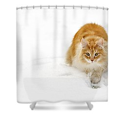111230p310 Shower Curtain
