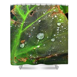 Untitled Shower Curtain by Amy Williams
