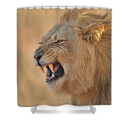 120118p081 Shower Curtain