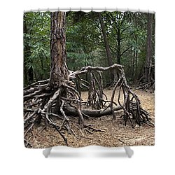 120223p257 Shower Curtain by Arterra Picture Library