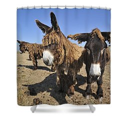 Shower Curtain featuring the photograph 120920p029 by Arterra Picture Library