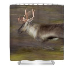 Shower Curtain featuring the photograph 121213p041 by Arterra Picture Library