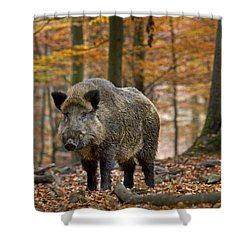 Shower Curtain featuring the photograph 121213p283 by Arterra Picture Library