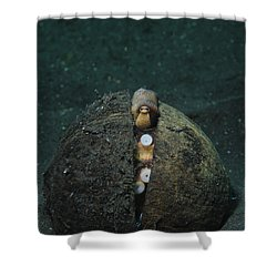 A Coconut Octopus, Lembeh Strait Shower Curtain by Steve Jones