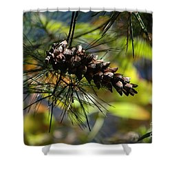 Shower Curtain featuring the photograph Autumn Light by Christiane Hellner-OBrien