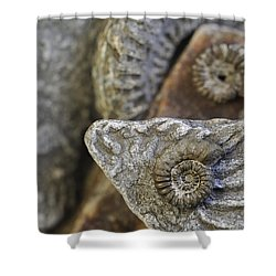 Shower Curtain featuring the photograph 130109p053 by Arterra Picture Library