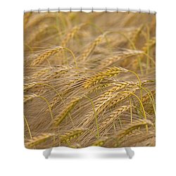 Shower Curtain featuring the photograph 130109p155 by Arterra Picture Library
