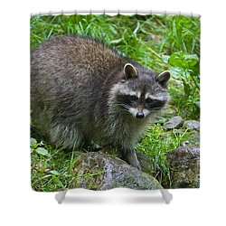 Shower Curtain featuring the photograph 130201p045 by Arterra Picture Library