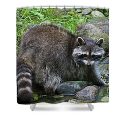 Shower Curtain featuring the photograph 130201p047 by Arterra Picture Library