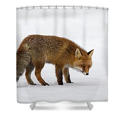 Shower Curtain featuring the photograph 130201p051 by Arterra Picture Library