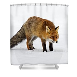 Shower Curtain featuring the photograph 130201p052 by Arterra Picture Library