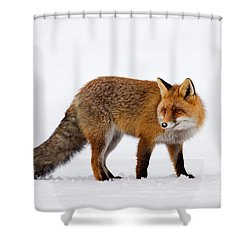 Shower Curtain featuring the photograph 130201p054 by Arterra Picture Library