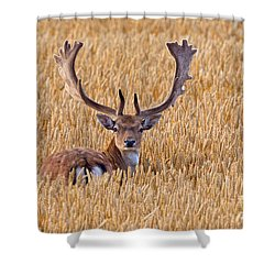 Shower Curtain featuring the photograph 130201p293 by Arterra Picture Library