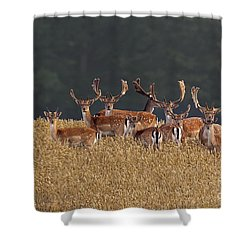 Shower Curtain featuring the photograph 130201p298 by Arterra Picture Library